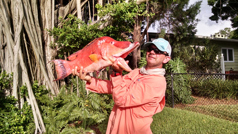 Sarasota Fishing Charter - Hogfish caught on an off-shore fishing charter