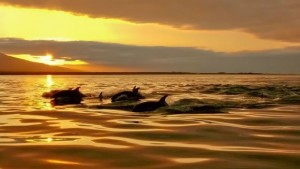 Siesta Key Florida Charter Services - take in our gorgeous sunsets as dolphins play